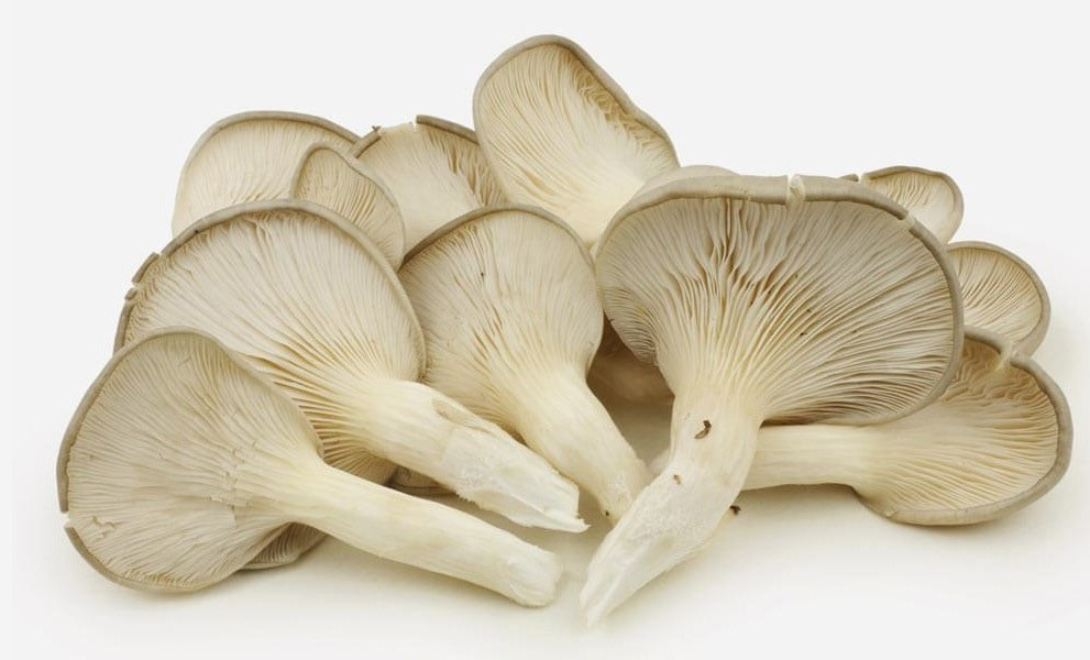oystermushrooms